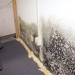 Fix mold problems before they get out of hand